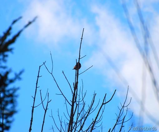 6. treetop-kab