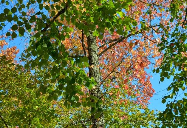 Glória Ishizaka - Outono 2013 - 63