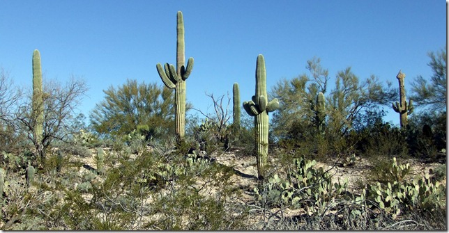 Saguaro hill 2-25-2013 9-32-05 AM 3216x1664
