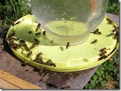 3,9,2011 včelí hoblování 393