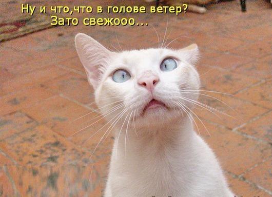 1261497205-prikolnye-koty-21-foto_AddFun.ru_11