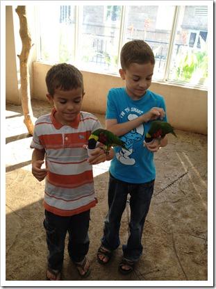 boys in bird kingdom