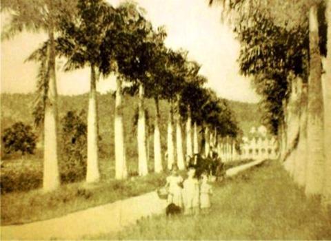 Rua das palmeiras I