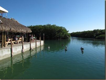 restaurant view of mangroves