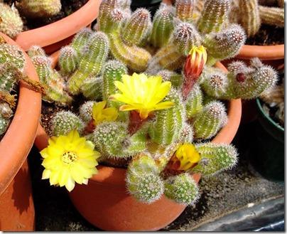 Cacti24-blog