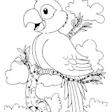 papagaio1.jpg
