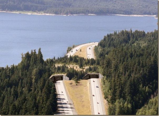 Ponts pour animaux - passages à faune (25)
