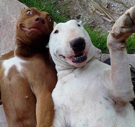selfie-cachorros-2