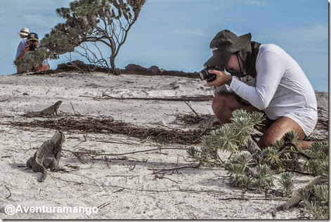 Fotografando as Iguanas em Cayo Largo