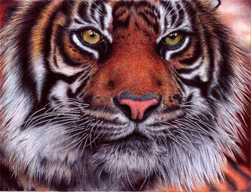 Desenho de tigre feito de caneta BIC