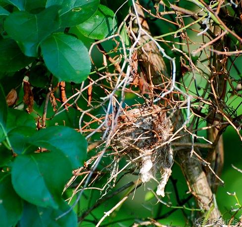 4. nest-kab