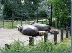 0262 Alberta Calgary - Calgary Zoo Destination Africa - African Savannah - Hippopotamus
