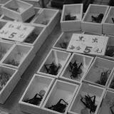 Shanghai - Pets market - Bêtes en boîtes