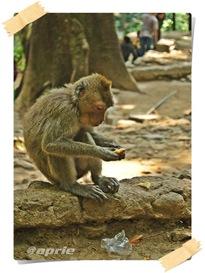 monyet-1