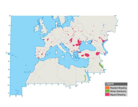 mappa Mignattino piombato