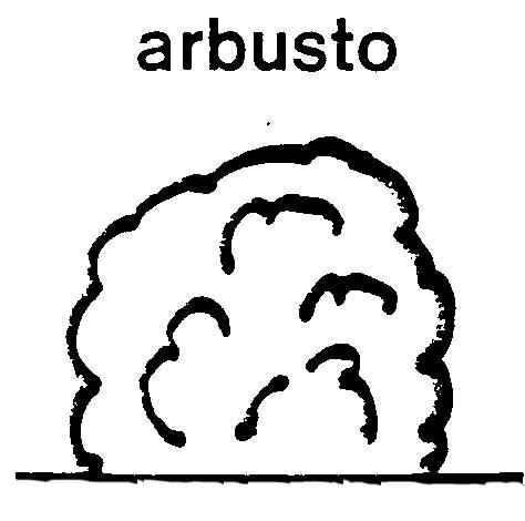 Dibujos de arbustos para colorear - Imagui