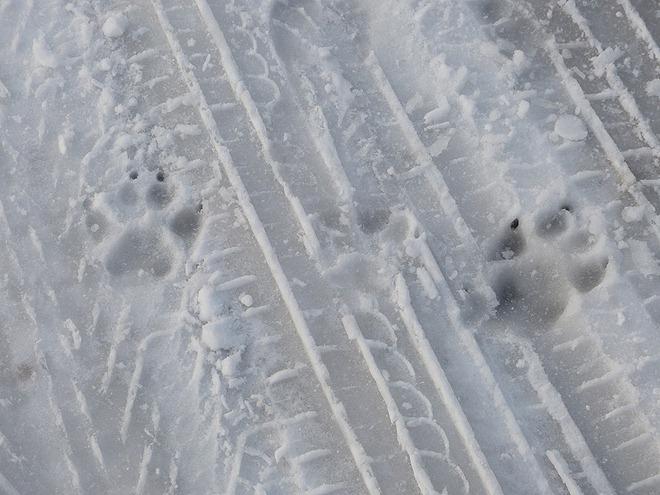 Чьи следы на снегу?