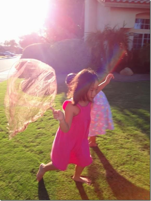 Butterfly Nets 031