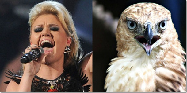 pop-stars-birds-13