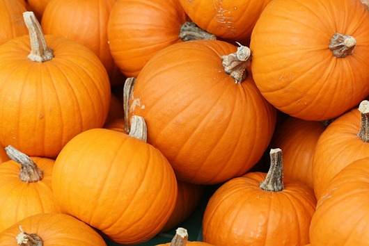 1024px-Bake_these_(pumpkins_in_Toronto)