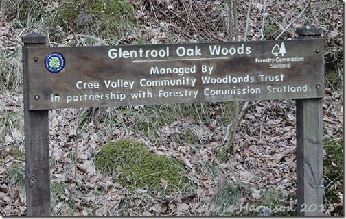13-glentrool-oak-woods