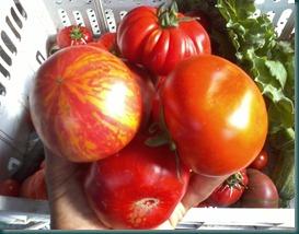 mary valeriano pomodori accademia del tartufo