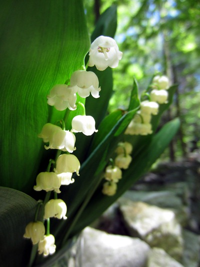 Spring wedding floers - lily of the valley