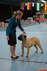 20130510-Bullmastiff-Worldcup-0405.jpg
