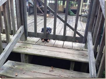 Sadie waits