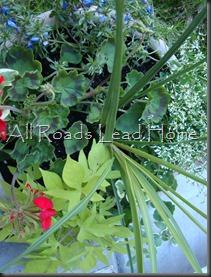 Planting Flowers 038