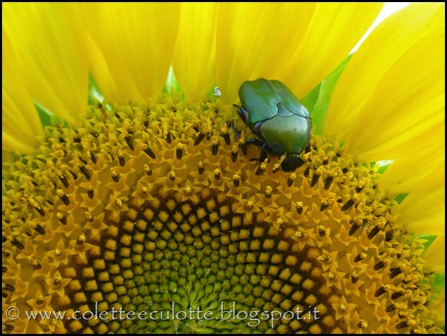 OrtoLà - La fioritura (11)