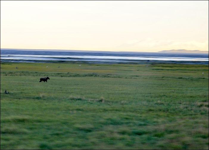 2013_08_Alaska 009