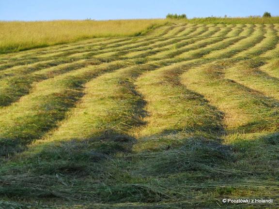 Płyną łąki, płyną...