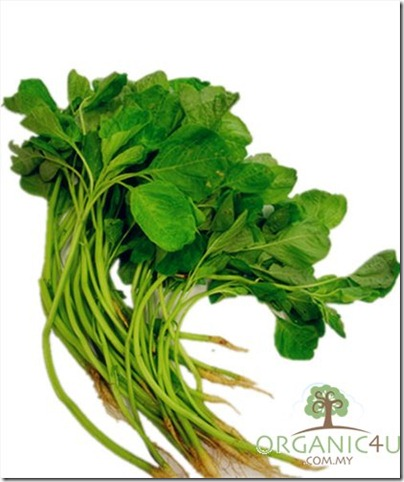 10 莧菜 - Yin Choi - Amaranth Leaf - Bayam