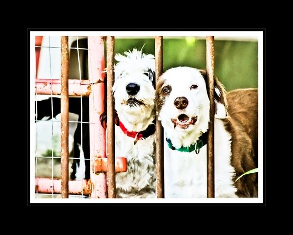 Rocky s Dogs blog sm