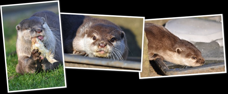 View Otters 2