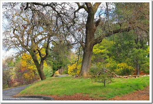140301_UCD_Arboretum_0008