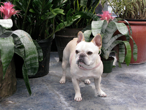 Franny, don't you think these bromeliad flowers look great with my coloration?