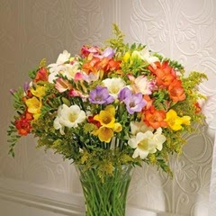 40 Mixed Guernsey Freesias - FLOWERS DELIVERED FREE to the UK