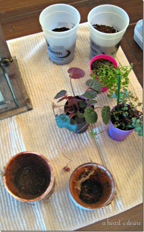 Plants and pots