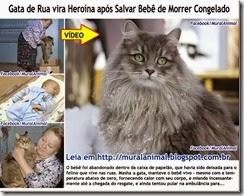 Gata_salva_bebe_russia_thumb[2]