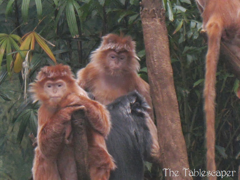 Bronx Zoo7
