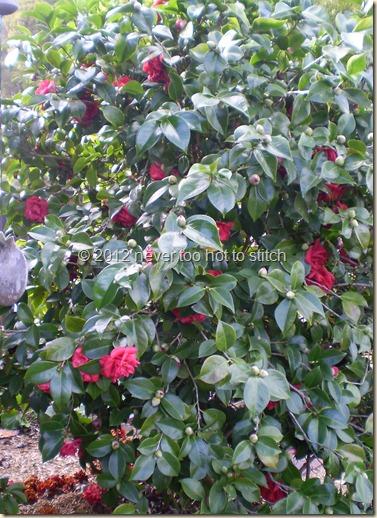 2012 winter camellia