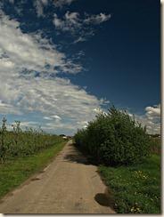 Wilderen: een landweg tussen de plantages (foto genomen met polarisatiefilter)
