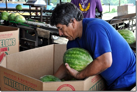 watermelons 11 0705 (33)