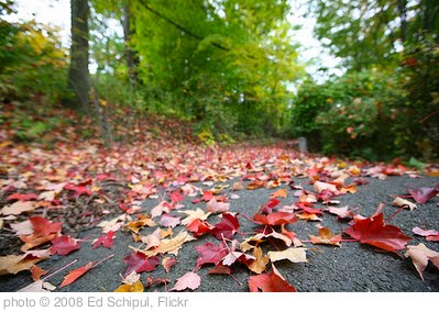 'fall' photo (c) 2008, Ed Schipul - license: http://creativecommons.org/licenses/by-sa/2.0/