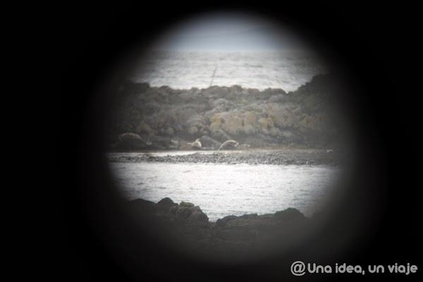 Illugastadir-Islandia-focas-3.jpg