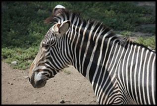 Zoo5 026