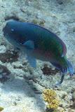 Rainbow Fish - Noumea, New Caledonia