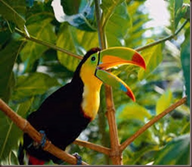 Amazing Pictures of Animals photo Nature exotic funny incredibel Zoo, Ramphastidae, Toucan, Bird, Alex (10)